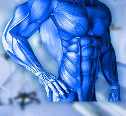 МРТ мягких тканей тела